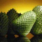 حقيقة علاج فاكهة القشطة للسرطان