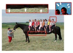 حقيقة أطول حصان في العالم