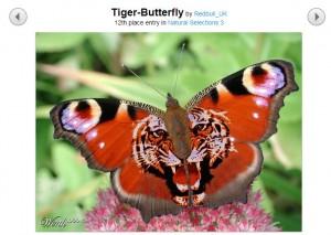 حقيقة الفراشة النمر أغرب فراشة بالعالم