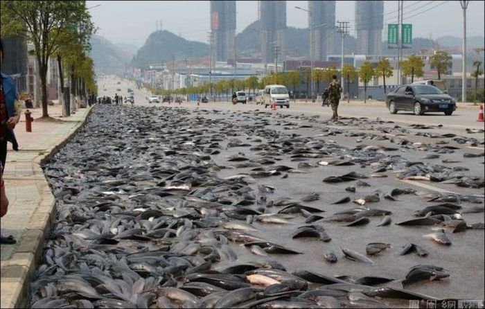 a_fishy_motorway_in_china_04