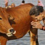 حقيقة ان الهندوس بيعبدوا البقر