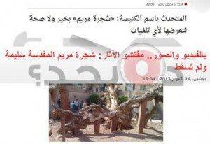 حقيقة اقتلاع شجرة السيدة مريم بالمطرية
