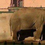 حقيقة صورة لفيل في حديقة الحيوان