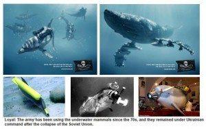 حقيقة صورة دلافين مقاتلة روسيا دربتها