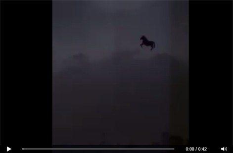 حقيقة حصان يطير في السماء جدة في السعودية