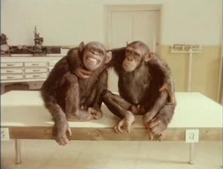 20061215082806-chimp-marato4