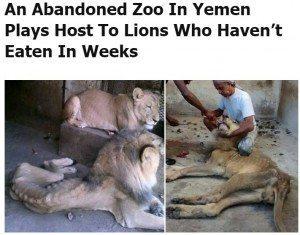 حقيقة صورة أسد هزيل في حديقة حيوان الجيزة