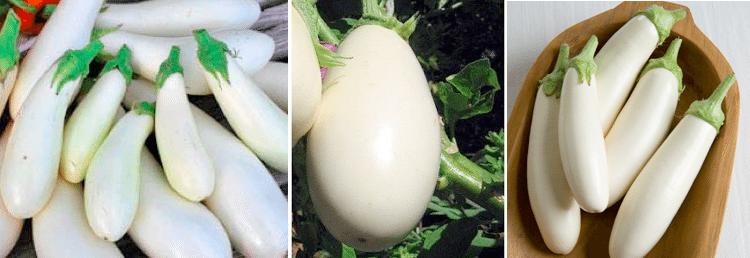 حقيقة صور نبات البيض