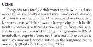 حقيقة فأر الكنغر و أنه يموت لو شرب مياه