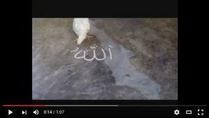 حقيقة دجاجة تكتب إسم الله بالأرز