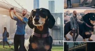 لك أن تتخيل إن دي حقيقية وكلبة كمان اسمها ڤيڤيان وعايشة في نيويورك مع الواد ده ميتش بوير