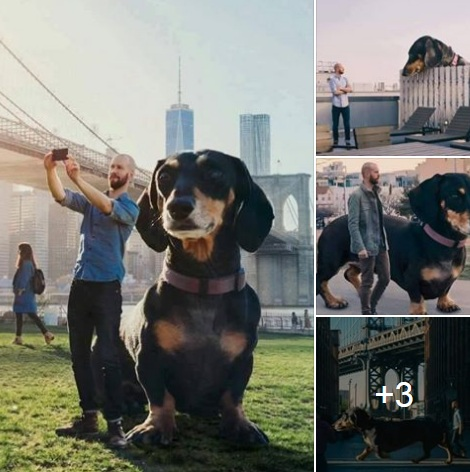 حقيقة صور الكلبة فيفيان