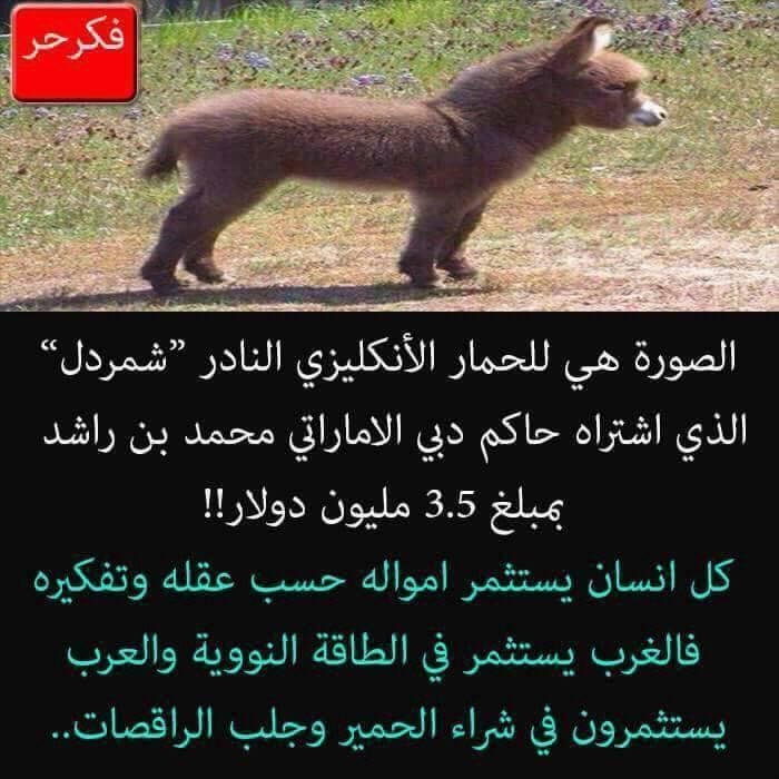 حقيقة صورة الحمار الذي إشتراه امير دبي
