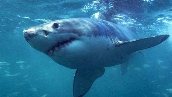 حقيقة عصابة تجلب أسماك القرش لمصر بهدف ضرب السياحة وتخويف السائحين
