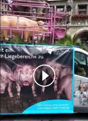 حقيقة حملة  ضد أكل الخنزير عشان بياكل زبالة