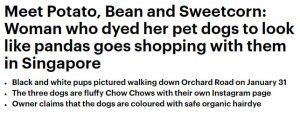حقيقة تهجين الصين كلاب الباندا من دب الباندا