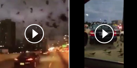 حقيقة هجوم الطيور على تكساس بعد حريق المسجد