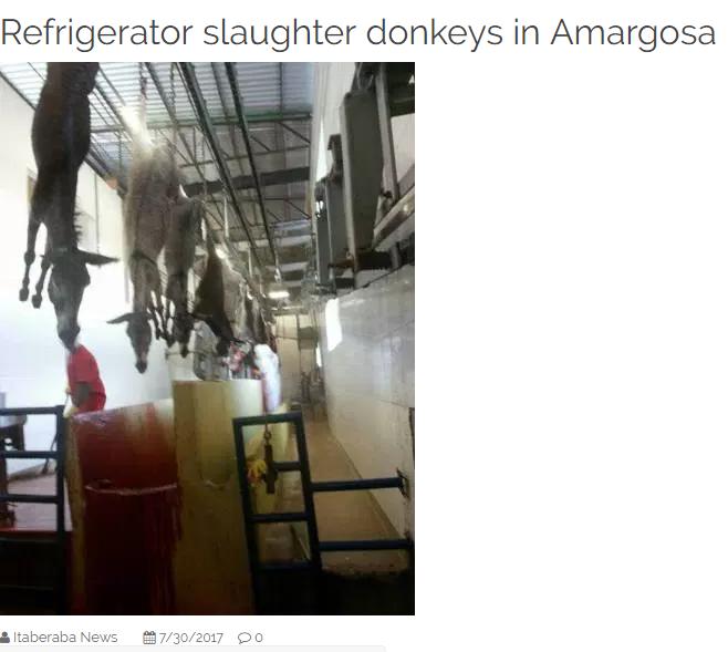 حقيقة وجود مصنع للحم الحمير في مصر