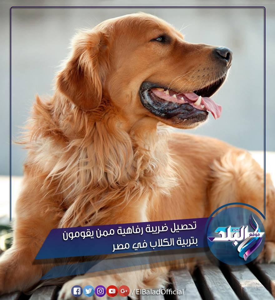 حقيقة تحصيل ضريبة رفاهية ممن يقومون بتربية الكلاب