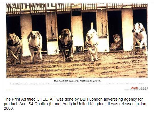 حقيقة رفض الفهد الجري في سباق مع الكلاب