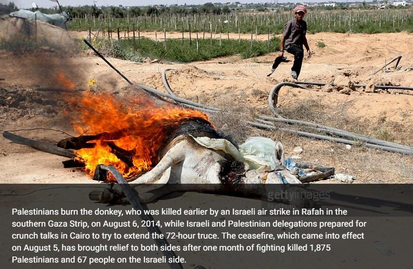 حقيقة حرق الفلسطنيين لحمار بعد ما لبسوه علم اسرائيل