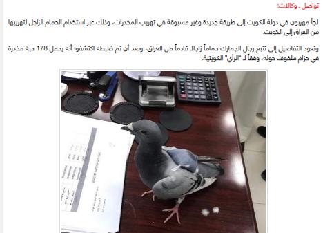 حقيقة تهريب مخدرات داخل حمام زاجل فى مصر
