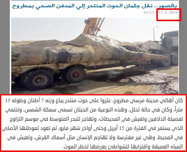 حقيقة صور نفوق حوت على ساحل مرسى مطروح