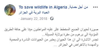 حقيقة قتل الضبع المخطط المنقرض في مصر
