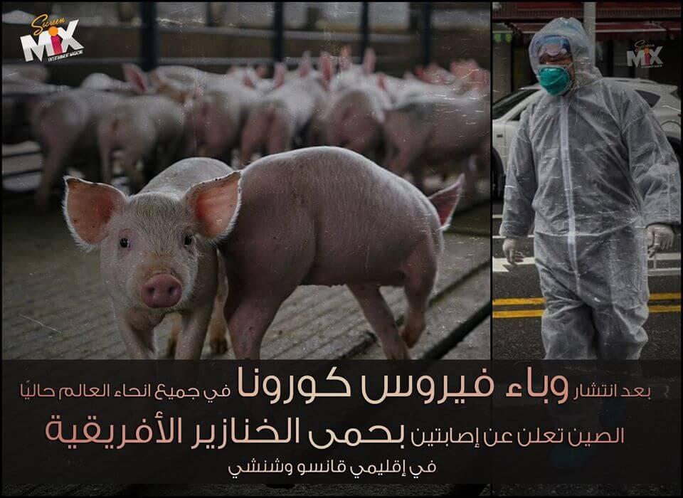 حقيقة فيروس حمى الخنازير الأفريقية