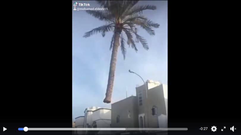 palmf