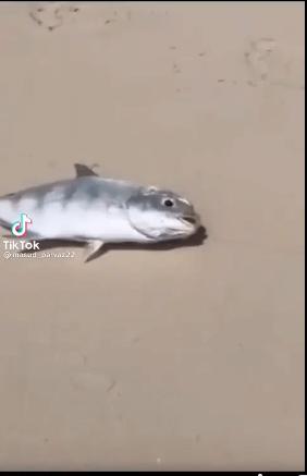 حقيقة فيديو لسمكة بتسحب سمكة تانية للمية عشان ماتموتش