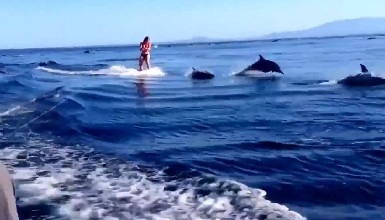 حقيقة فيديو الدلافين في سيناء